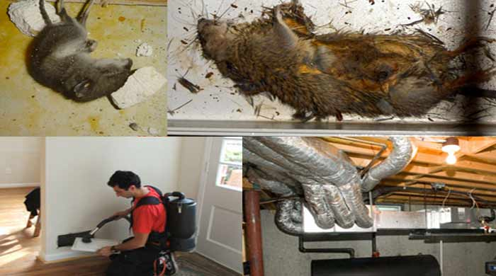 Duct Cleaning, Repair and Dead Mouse Removal