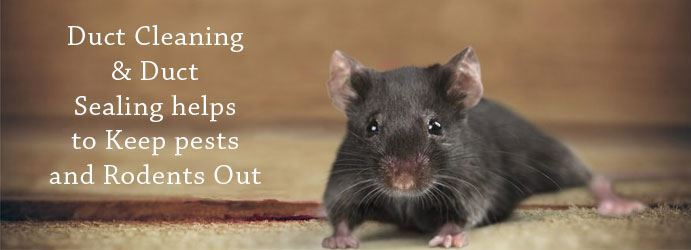 Duct Cleaning & Duct Sealing helps to Keep pests and Rodents Out